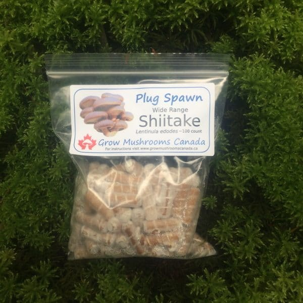 Shiitake wide temperature plug spawn Canada