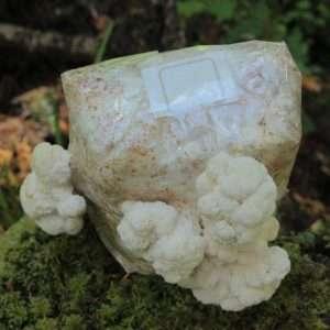 Lion's Mane Hericium erinaceus mushroom grow kit